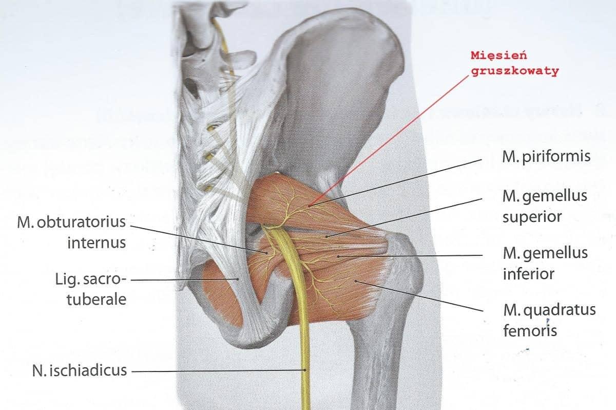 Ból mięśnia gruszkowatego